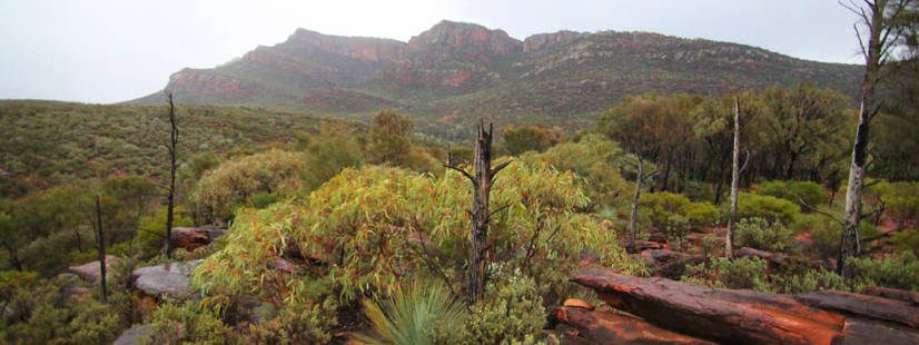 A surprisingly lush area of greenery in the Flinders Ranges