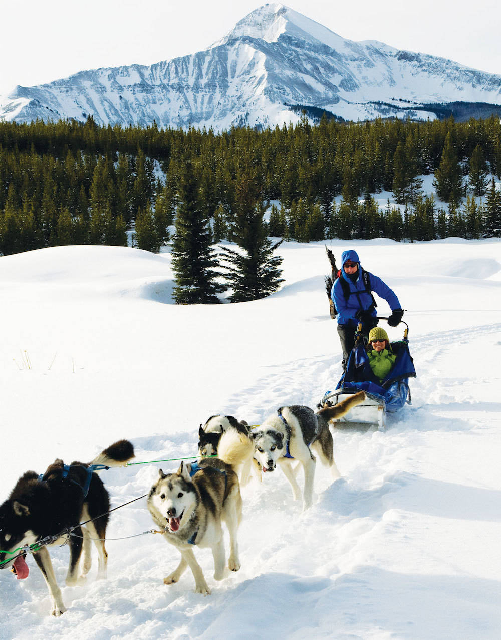 Group of snow dogs pulling a ski sled