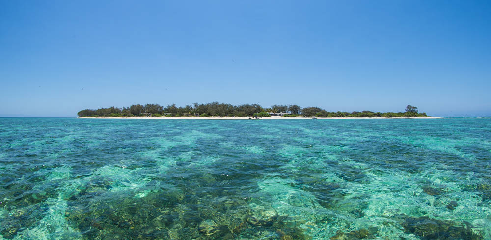 Tourism Australia expects more tourists to visit the Southern Great Barrier reef this year.