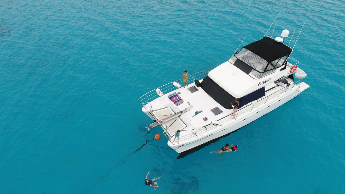 snorkelling & swimming off a boat on the Great Barrier Reef