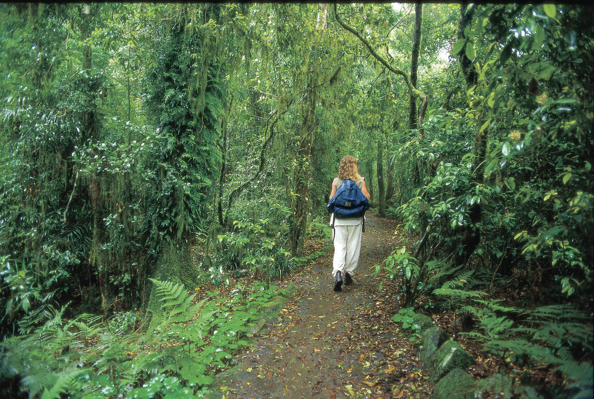 Woman walking through rainforest with back pack on getaway
