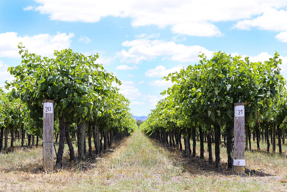 Many Mudgee wineries are family-friendly.
