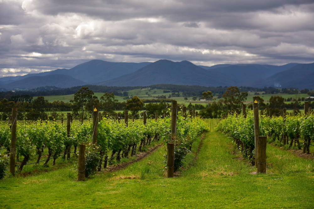 Explore the vineyards and gourmet delights in the Yarra Valley.